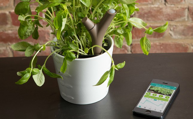 digital societe de consommation plante